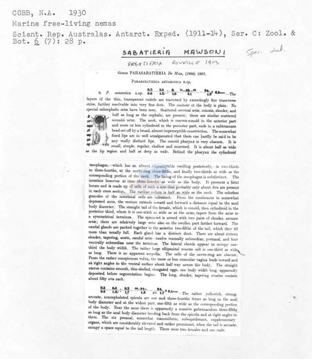 Sabatieria mawsoni