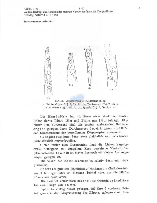 Siphonolaimus pellucidus