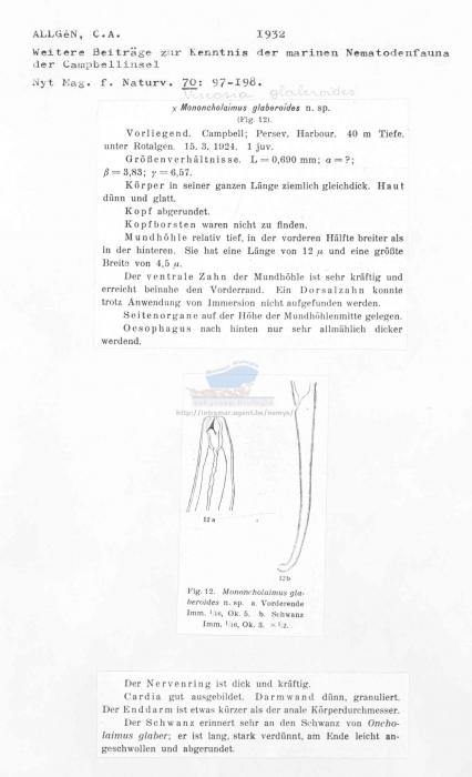 Viscosia glaberoides