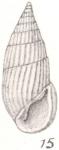 Rissoina crebrecostata Thiele, 1930