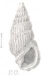 Rissoina filicostata Preston, 1905
