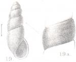 Rissoina oscitans Preston, 1905
