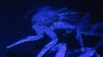 Europese Aquaria & Mariene Instituten