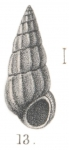 Rissoina pseudoscalaris Melvill & Standen, 1901