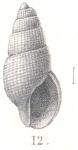 Stosicia paschalis (Melvill & Standen, 1901)