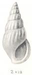 Rissoina leucophanes Tomlin, 1931