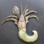 Pseudopagurus granulimanus