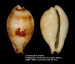 Austrasiatica hirasei