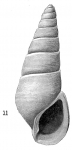 Rissoina lintea Hedley & May, 1908
