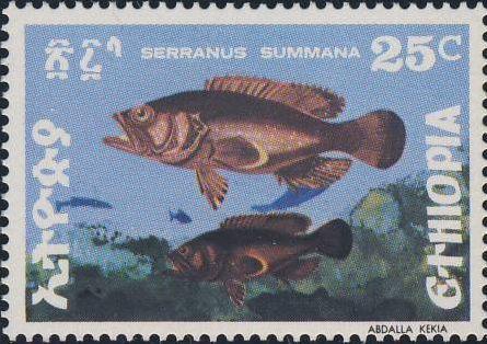 Serranus sp