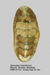 Stenoplax limaciformis