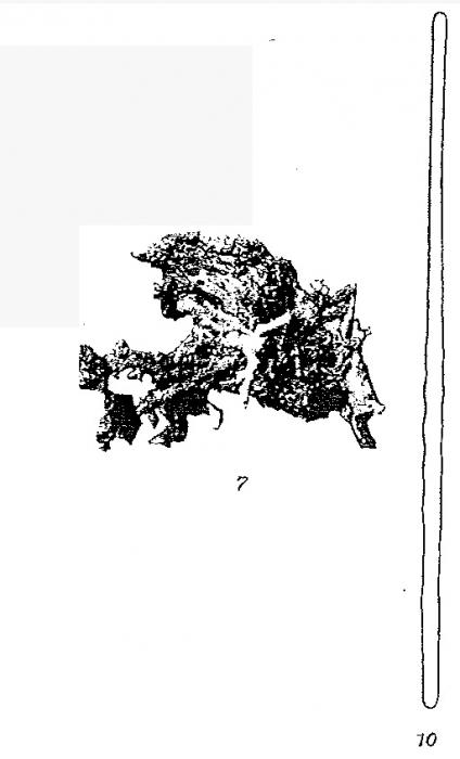 Hymedesmia rhodus