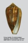 Conus textile