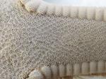 Astropecten articulatus Neotype