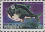 Argyropelecus sp.
