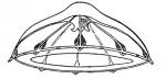 Sminthea eurygaster from Kramp (1959)