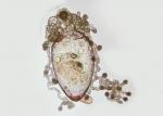 Nanomia bijuga siphonula larva