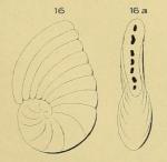 Peneroplis gervillei d'Orbigny, 1850