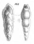 Textilaria quadrilatera Schwager, 1866