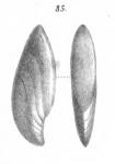 Cristellaria insolita Schwager, 1866
