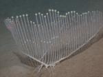 Chondrocladia lyra with 2 vanes, 3318 m depth