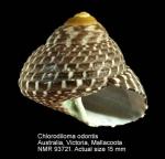 Chlorodiloma odontis