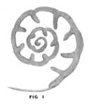 Endothyra bowmani Phillips, 1846