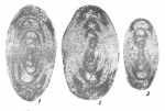 Uralodiscus librovichi Malakhova, 1973
