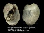 Praephiline finmarchica