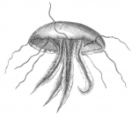 medusa drawing by Swartz (1791)