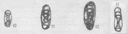 Permodiscus primaevus Pronina, 1963