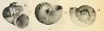 Cyclostrema ponsonbyi Dautzenberg & Fischer, 1897, original figure