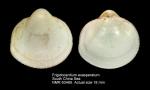 Frigidocardium exasperatum