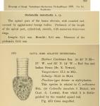 Codonellopsis morchella was originally described as Condonella morchella by Cleve (1899)