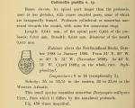 Condonellopsis pusilla was orignially described by Cleve (1899) as Codonella pusilla