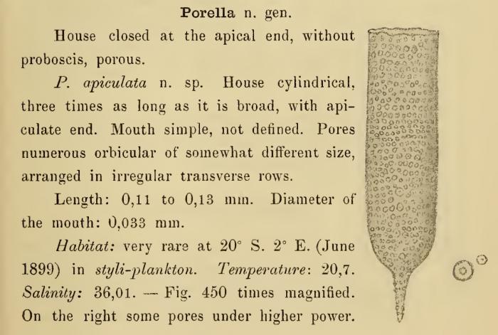 Poroecus apiculatus was orginally described by Cleve (1899) as Porella apiculata