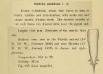 Xystonellopsis paradoxa was originally described by Cleve (1899) as Undella paradoxa