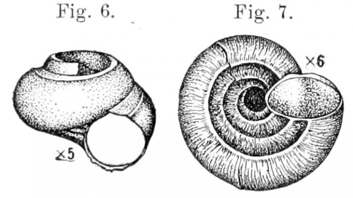 Moelleriopsis abyssicola Busk, 1897, original figures