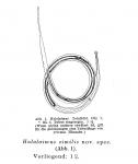 Halalaimus similis Allgén, 1930