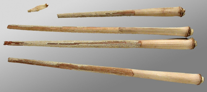 Acanthocidaris hastigera (primary spines)