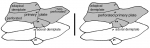 Sperosoma (aboral ambulacral plates)