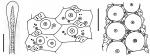 Phormosoma placenta (spine + ambulacral plates)