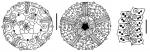 Aporocidaris eltaniana (aboral + oral + ambulacral plates)