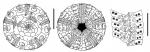 Notocidaris lanceolata (aboral + oral + ambulacral plates)