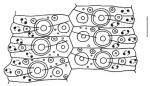 Pseudechinus novaezealandiae (ambulacral plates)