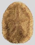 Clypeaster reticulatus (aboral)