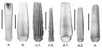 Goniocidaris (secondary spines)