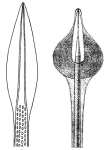 Echinothurioida (aboral secondary spines)