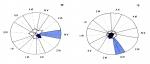 Echinometridae (diagrammatic scheme of ambulacra and interambulacra)