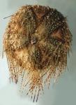 Astropyga pulvinata (aboral)